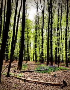Fallen-Trees-The-Enchanted-Forest-Tervuren-Belgium-Elaine-Kennedy